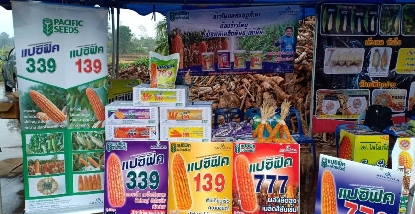 Mr. Paiboon Fhanaka, Sales Promotion Officer Joined the corn market after the rice farming season, A. Thoeng, Chiang Rai