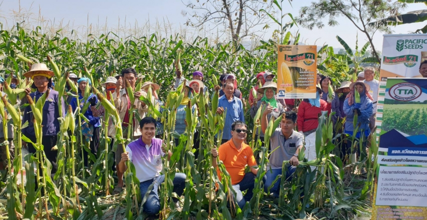 Pacific held a meeting on sweet corn demonstration plots, Muang District, Kamphaeng Phet Province