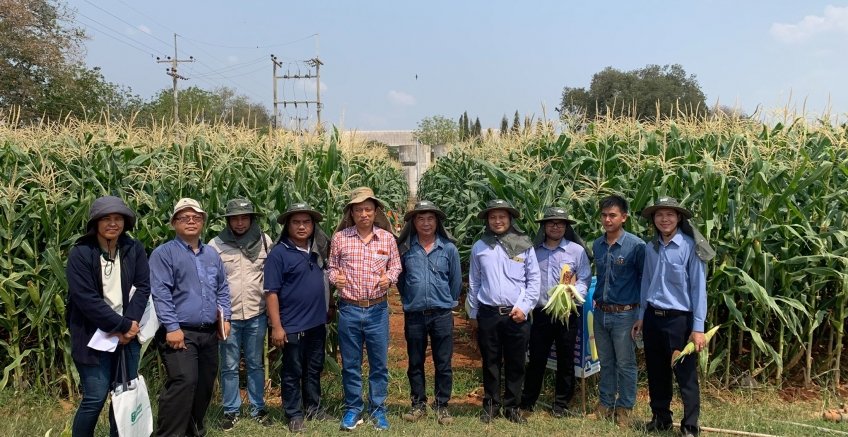 Pacific welcomes visitors from private companies to observe the sweet corn conversion